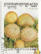 Pigskin poison puffball, Royaume du Cambodge, Cambodia, stamp, plant, mushroom, 1500 R, Postes, 2000, Scleroderma vulgare, Scleroderma citrinum