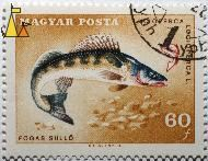 Pike-perch on brown, Magyar, Hungary, stamp, fish, 60 f, Posta, Cziglenyi A, Fogas süllö, Lucioperca lucioperca, Lucioperca lucioperca L, Sander lucioperca