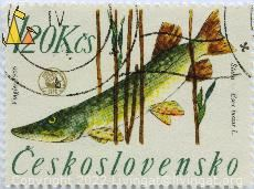 Pike in the Reed, Cheskoslovensko, Czechoslovakia, stamp, fish, 1.20 Kcs, Vingler, 1966, Stuka, Cips, Esox lucius