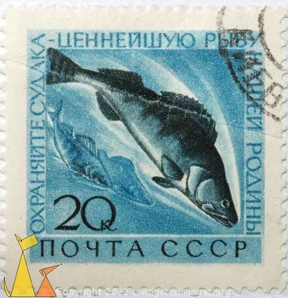 Pikepearch, CCCP, Soviet, Russia, stamp, fish, Sander lucioperca, noyta, 20 k
