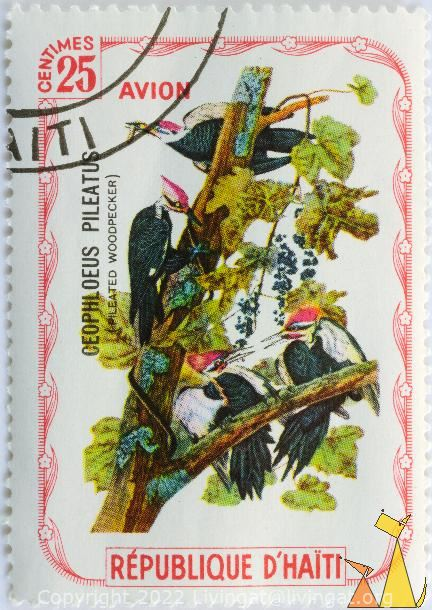 Pileated Woodpecker, Republique D'Haiti, Haiti, stamp, bird, 25 Centimes, Avion, Ceophloeus pileatus, Dryocopus pileatus