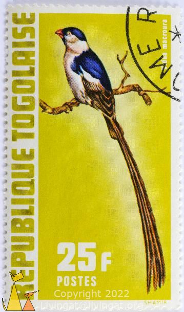 Pin-tailed Whydah, Republique Togolaise, Togo, stamp, bird, long tail, Postes, Shamir, 25 f, yellow, Vidua macroura