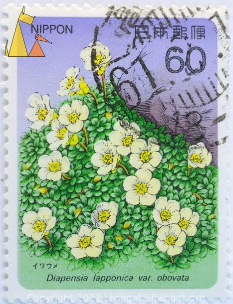Pincushion plant, Nippon, Japan, stamp, plant, flower, Diapensia lapponica var. obovata, Diapensia lapponica, 60