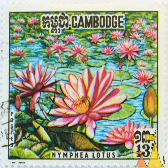 Pink Tiger Lotus, Cambodge, Cambodia, stamp, plant, flower, 13, Nymphea lotus, Postes, Nymphaea lotus
