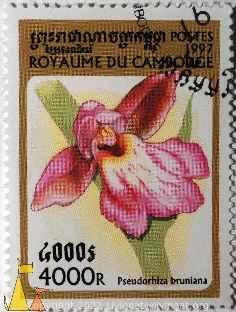 Pink orchid, Royaume du Cambodge, Cambodia, stamp, plant, flower, orchid, Pseudorhiza bruniana, Postes, 1997, 4000 R