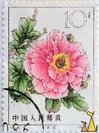 Pink rose, China, stamp, plant, flower, Rosa spp, rose, 61.15-12, 347, 1964, 10