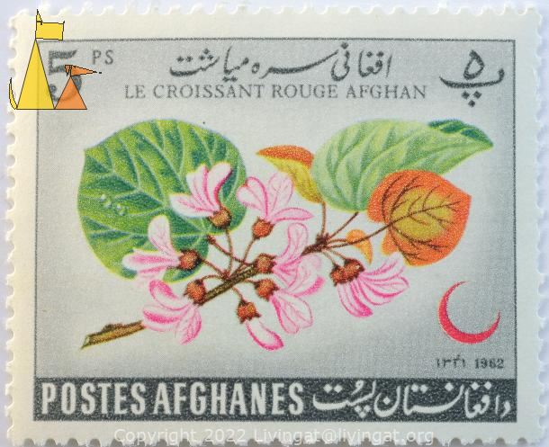Pink tree flower, Afghanes, Afghanistan, stamp, plant, flower, Postes, 5 Ps, Les croissant rouge Afghan, 1962