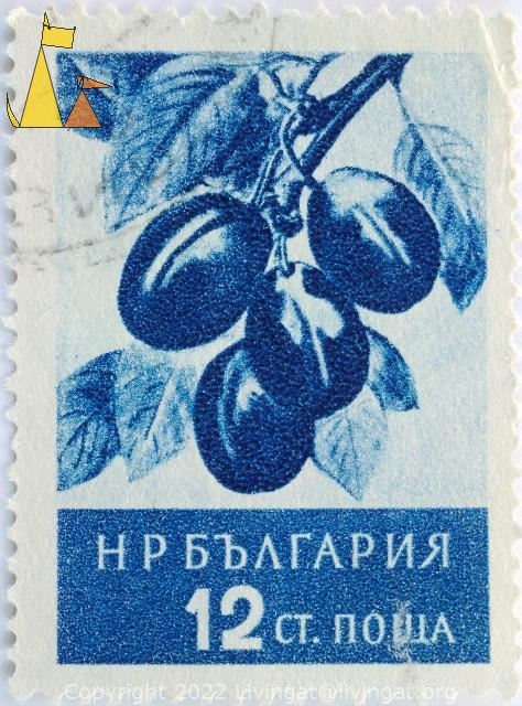 Plums, Bulgaria, stamp, plant, fruit, tree, Prunus spp, 12 Ct