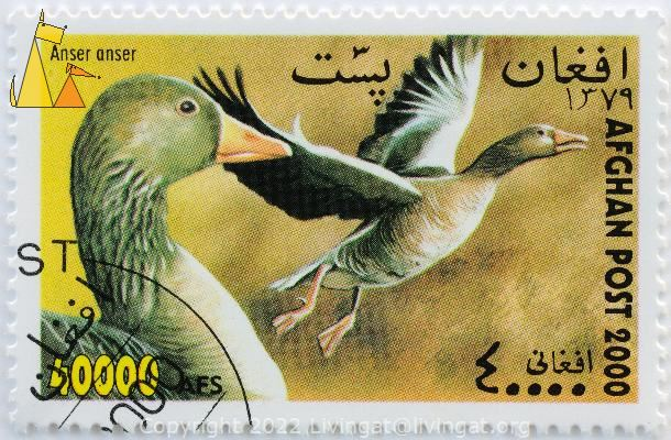 Portait and Flying, Afghan, Afghanistan, stamp, bird, post, 2000, 40 000 AFS, Anser anser