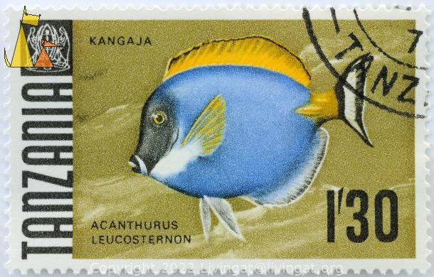 Powderblue Surgeonfish, Tanzania, stamp, coat of arms, fish, Acanthurus leucosternon, 1.30, Kangaja