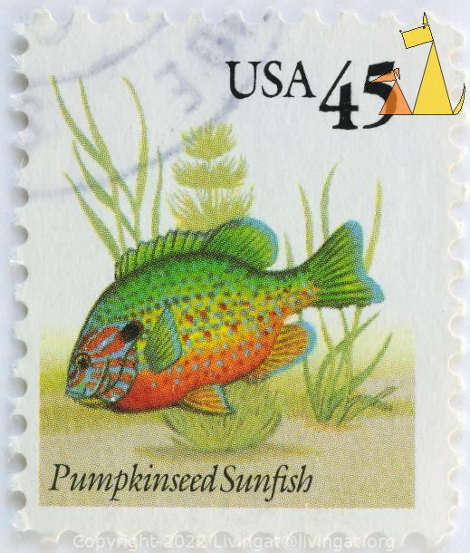 Pumpkinseed Sunfish, USA, stamp, fish, 45, Lepomis gibbosus
