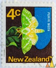 Puriri Moth, New Zealand, stamp, insect, moth, butterfly, 4 c, Aenetus virescens