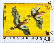 Purple Heron, Magyar, Hungary, stamp, bird, flying, 1 Ft, Gal Ferenc, 1976, Vörös Gem, Posta, Ardea purpurea