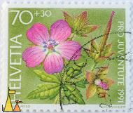 Purple flower, Helvetia, Switzerland, stamp, plant flower, Pro Juventute 1991, Courvoisier, Verni wyss, 70 +30