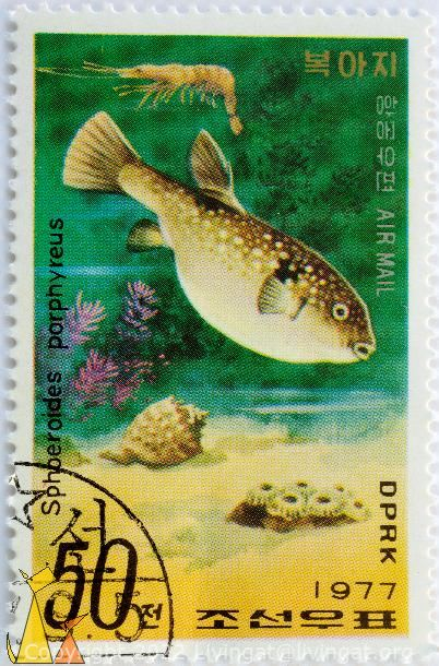 Purple puffer, DPRK, North Korea, stamp, fish, 1977, Air Mail, 50, Sphoeroides porphyreus, Takifugu porphyreus