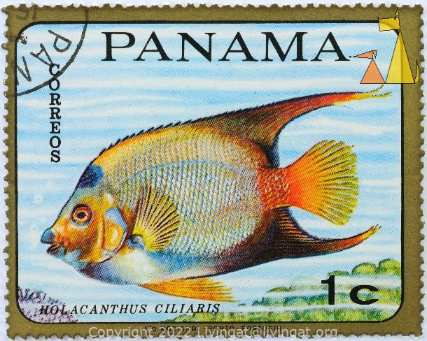 Queen Angelfish, Panama, stamp, fish, Correos, Lito Nacional Porto Portugal, 1 c, Glod Frame, Holacanthus ciliaris