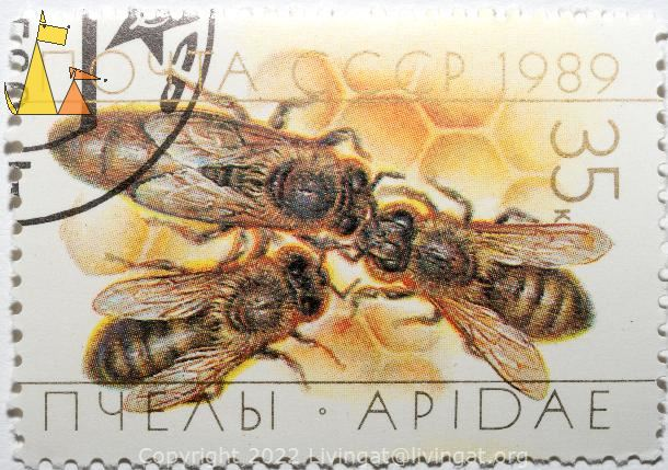Queen Bee, CCCP, Russia, stamp, insect, bee, 1989, 35 K, Apidae, hexagon, Apis mellifera