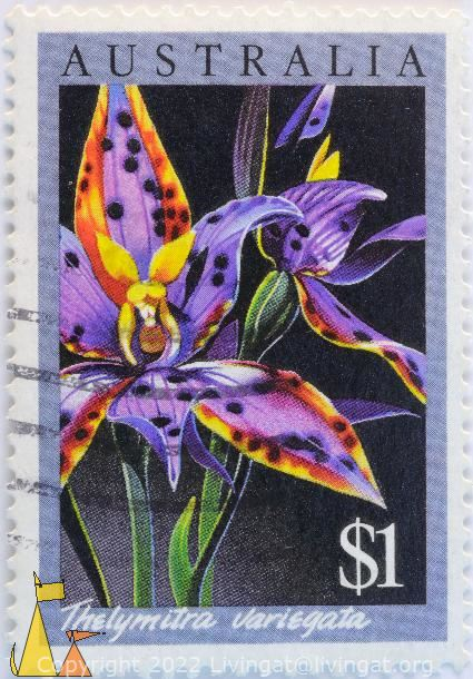 Queen of Sheba, Australia, stamp, plant, flower, $1, Thelymitra variegata