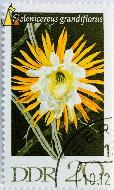 Queen of the Night, DDR, Germany, stamp, plant, flower, 20, Berlin, Selenicereus grandiflorus