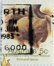 Queensland Hairy-nosed Wombat, Australia, stamp, 1983, Endangered Species, 5 c, Lasiorhinus krefftii
