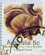 Queensland Hairy-nosed Wombat, Australia, stamp, 1983, Endangered Species, 5 c, Lasiorhinus krefftii, Adelaid