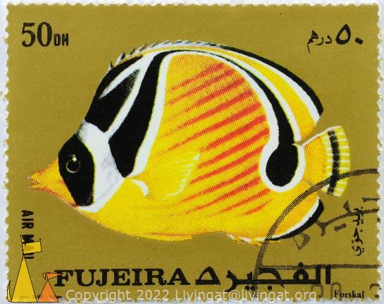 Raccon on Gold, Fujeira, Fujairah, stamp, fish, air mail, gold, Imp SLIM Liban, 50 Dh, Forskal, Chaetodon lunula