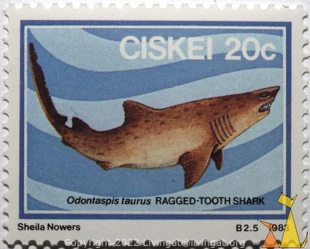 Ragged-tooth shark, Ciskei, stamp, shark, Sheila Nowers, B2.5,  20 c, 1983, Ragged-tooth shark, Odontaspis taurus, Carcharias taurus