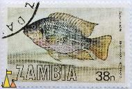 Red-Breasted Bream, Zambia, stamp, fish, 38 n, Tilapia rendalli