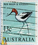 Red-necked Avocet, Australia, stamp, bird, 13 c, Recurvirostra novaehollandiae