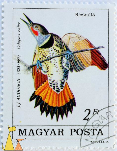 Red-shafted Flicker, Magyar, Hungary, stamp, bird, 2 Ft, 1985, Kincses A, JJ Audubon, 1785-1851, Rezkullö, Colaptes auratus cafer, Colaptes cafer