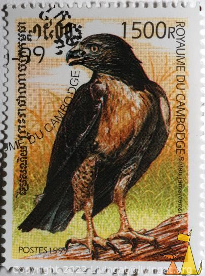 Red-tailed Hawk, Royaume du Cambodge, Cambodia, stamp, bird, bird of preym Buteo jamaicensis, Red-tailed Hawk, Postes, 1999, 1500 R