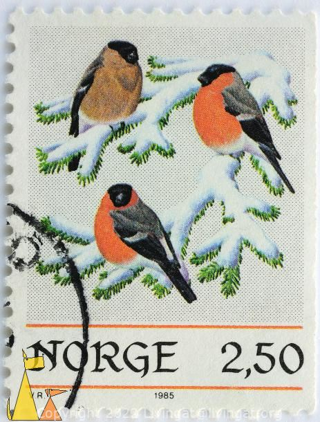 Red Bellies, Norge, Norway, stamp, bird, Pyrrhula pyrrhula, 2.50, 1985, snow, VR, Picea abies