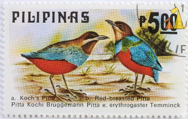 Red Breasted Pittas, Pilipinas, Philippines, stamp, bird, 5.00 P, Kochs Pitta, Red-breasted Pitta, Pitta Kochi, Bruggemann Pitta, Pitta e erythrogaster, Temminick