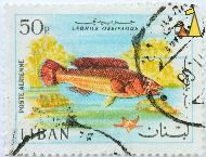 Red Cockoo Wrasse, Liban, Lebanon, stamp, fish, 50 p, Poste Aerienne, starfish, Labrus ossifagus
