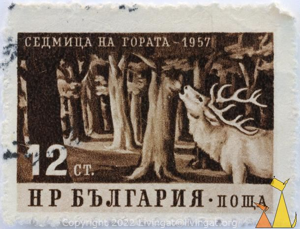 Red Deer, Bulgaria, stamp, mammal, Cervus elaphus, 12 Ct, roar, 1957