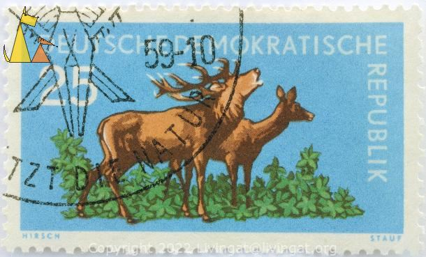 Red Deer Couple, Deutsche Demokratishe Republik, Germany, stamp, mammal, Stauf, 25, Hirsch, pair, Cervus elaphus, couple