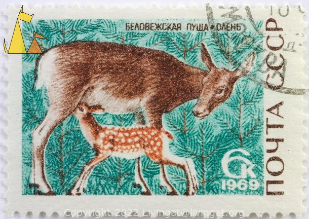 Red Deer With Fawn, CCCP, Russia, stamp, mammal, deer, fawn, 6 k, 1969, suckling, Cervus elaphus
