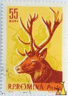 Red Deer on Yellow, RP Romina, Romania, stamp, mammal, Cervus elaphus, 55 Bani, Horn, I Dumitrana, 1961, Posta, Knight