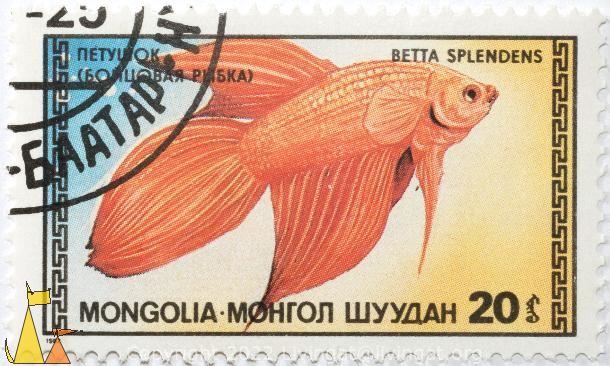 Red Fighting Fish, Mongolia, stamp, fish, 1987, Betta splendens, 20