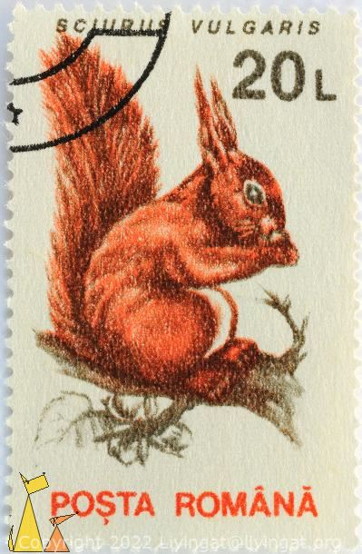 Red Squirrel, Romana, Romania, stamp, mammal, Sciurus vulgaris, Posta, 20 L
