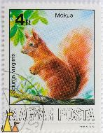 Red Squirrel in a Tree, Magyar, Hungary, stamp, mammal Sciurus vulgaris, Posta, 4 Ft, Mokus, 1986, A Kincses