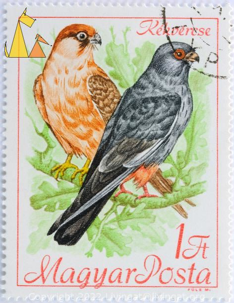 Red and Gray falcon, Magyar, Hungary, stamp, bird, bird of pray, Kék vércse, 1 Ft, Posta, Fule M, Falco vespertinus