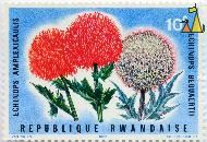 Red and White Globe Thistles, Republique Rwandaise, Rwanda, stamp, plant, flower, 1966, Courvoisier SA, J Van Noten, Echinops amplexicaulis, Echinops bequaertii, Echinops giganteus, Echinops amplexicaulis