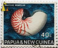 Red and White Shell, Papua and New Guinea, Papua New Guinea, stamp, shell, Nautilus pompilius, 40 c