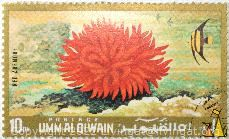 Red anemone, Umm al Qiwain, UAE, stamp, anemone, 10 Dh, Postage, Red anemone, Actinia bermudensis