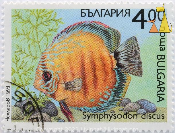 Red discus, Bulgaria, stamp, fish, nowa, 4.00, 1993, Symphysodon discus