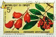 Red fruit and flowers, Republique du Congo, Congo, stamp, plant, tree, flower, Delreiu, P Lambert, DN Halle, Postes, 1970, 5 F, Connaracees, Connarus griffonianus
