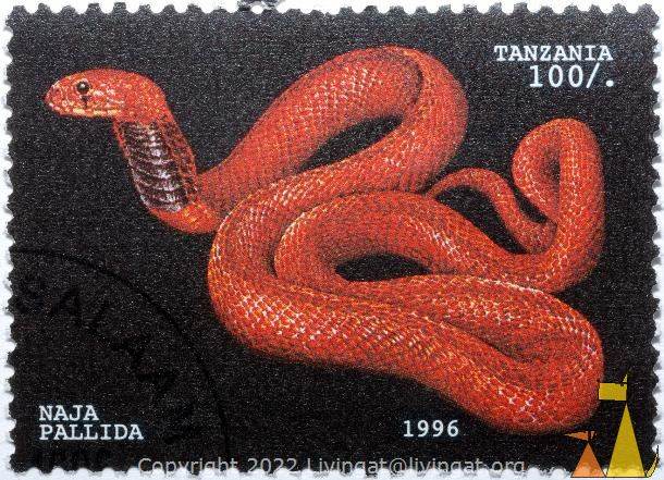 Red spitting cobra, Tanzania, stamp, reptile, snake, Naja pallida, Red spitting cobra, 1996, 100
