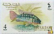 Redbelly Tilapia, Sharjah and Dependencies - Khor Fakkan, Sharjah, stamp, fish, 4 NP, Harrison and Sons Ltd London, Tilapia zillii
