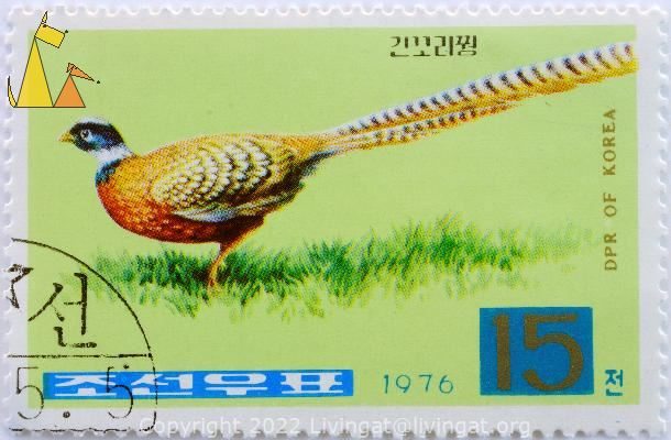 Reeves Pheasant, DPR of Korea, North Korea, stamp, bird, 1976, 15, Syrmaticus reevesii